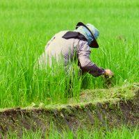 Kenali Jenis Gulma dan Penggunaan Herbisida yang Tepat!