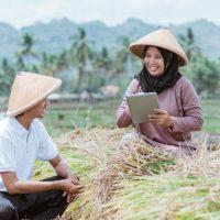 Mengapa petani perlu melakukan analisa usaha tani?